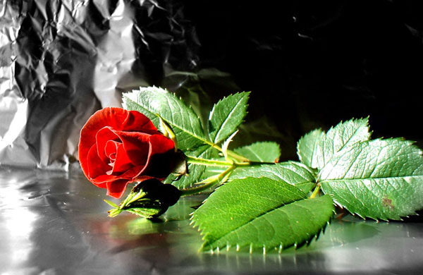 flower-wallpaper-red-rose